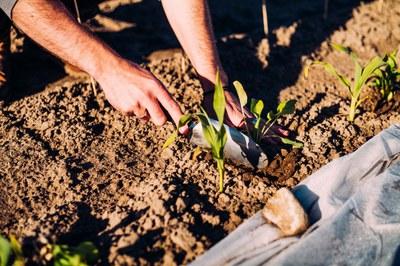 Welternährungstag 2021: Slow Food fordert integrierte Ernährungspolitik