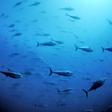 aktuelles-aktuelles_2014-emd_nachbericht_ocean2012_k.jpg