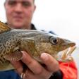 aktuelles-aktuelles_2014-fisherman-holding-cod_112.jpg