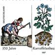 aktuelles-aktuelles_2015-kartoffelanbau-briefmarke_112.jpg
