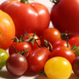 aktuelles-aktuelles_2016-tomaten_vielfalt_margret_artzt_112.jpg
