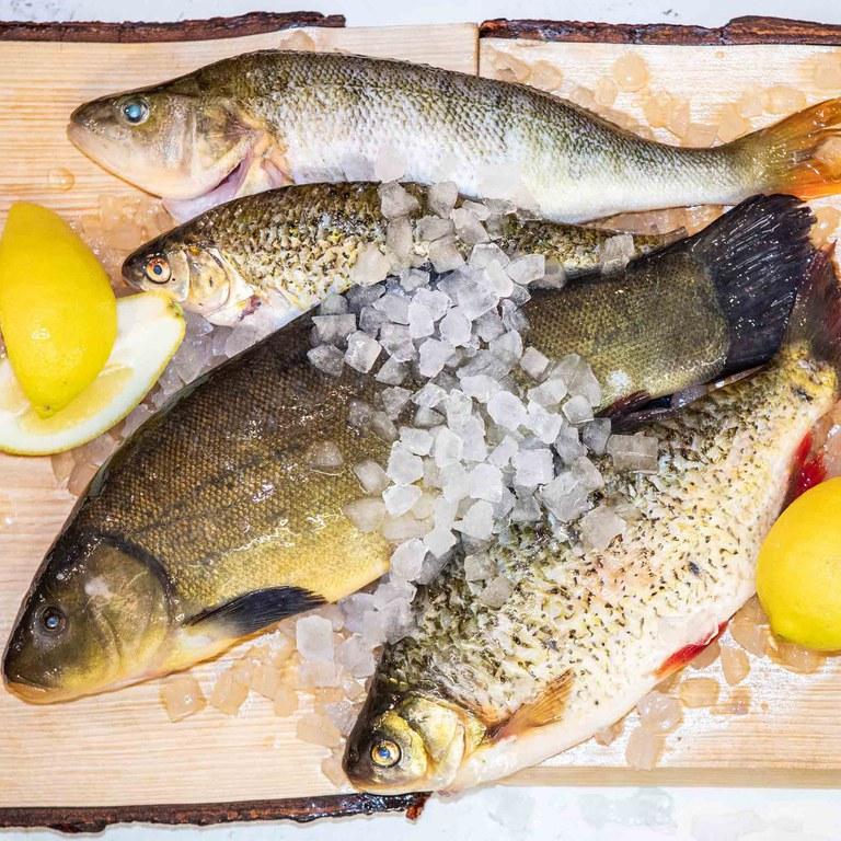 2019_Fisch_(c)Slow Food_25_klein 1..1.jpg
