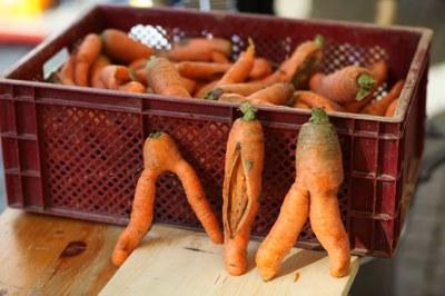 Krummes Gemüse, das oft in die Tonne gerät, weil es nicht marktfähig ist