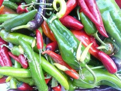 Chilivielfalt
