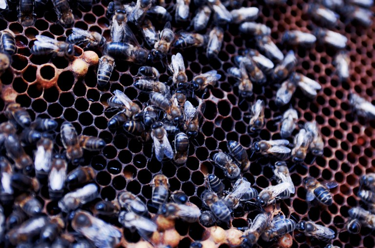 Biene Sizilien 2_© Slow Food Archiv.jpg