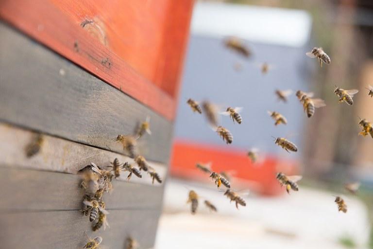 Bienen am Flugloch (c) volksbegehren-artenschutz BW.jpg