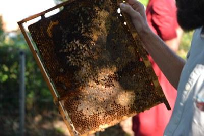 Bienen Event SFD und Misereor (c) Misereor.JPG