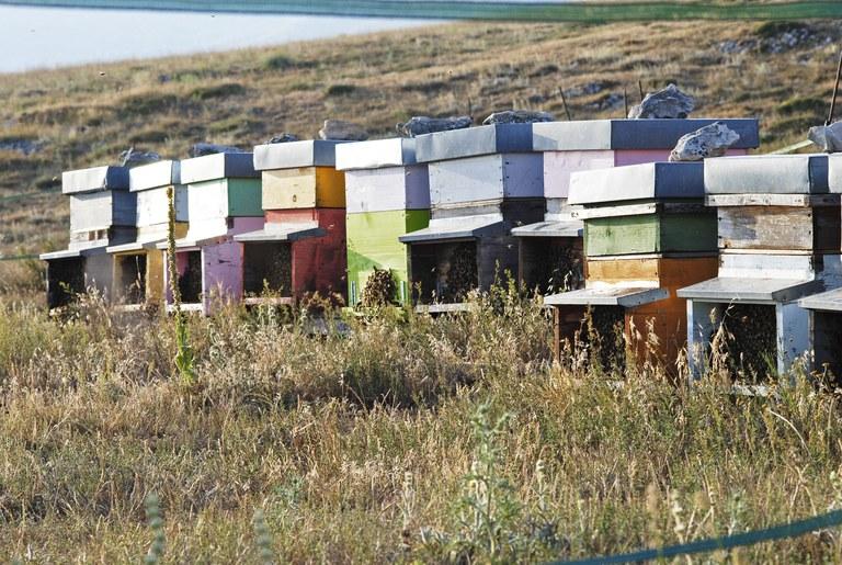Bienenvölker © Valerie Ganio Vecchiolino.JPG