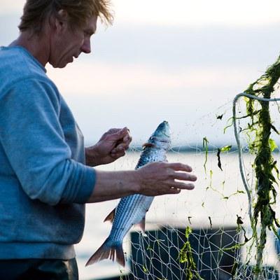 Fisch Dossier© Fokke van Saane 1..1.jpg