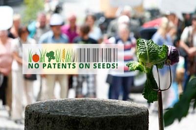 Keine Patente auf Saatgut