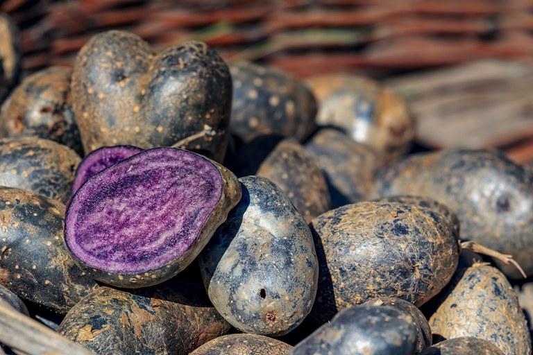 Blaue Kartoffel_Pixabay.jpg