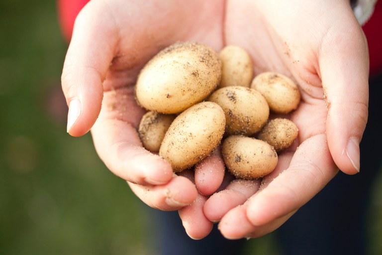 Kartoffeln (c) Pexels.jpg