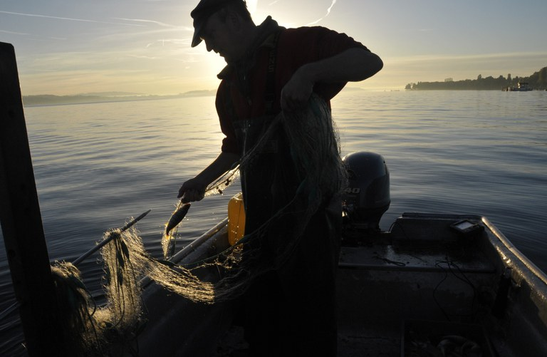 Bodenseefischer (c) Verband Badischer Berufsfischer am Bodensee e.V.jpg