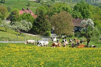 Voelkleswaldhof (c) Anja Frey.JPG