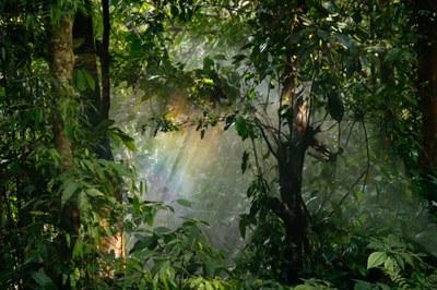 Rainforest_(c)Pexels.jpg