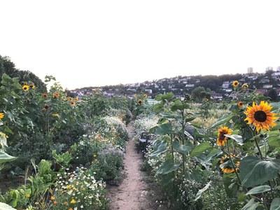 Vom Acker auf den Teller Ganz nach der Slow Food Philosophie baute die Fuldaer Gruppe auf einer Parzelle vom tegut-Saisongarten ihr eigenes Gemüse an und bereiteten es gemeinsam zu (c) Arthur Schulz.jpg