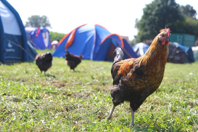 (c) Andrea Bolognin_Camping with chicken_SFYN Europe.JPG
