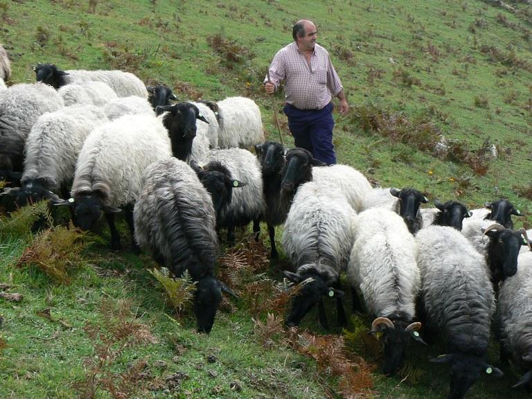 Schafe Spanien © Slow Food Archiv.JPG