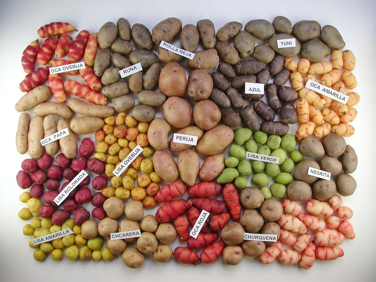 Südamerka Kartoffeln © Marcello Marengo.JPG
