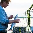 aktuelles-aktuelles_2018-wadden-sea-niederlande-2-fokke-van-saane-112x112.jpg